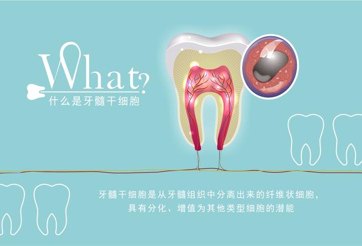 什么是牙髓干细胞